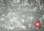 Image of wild birds United States USA, 1921, second 55 stock footage video 65675021532