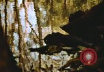 Image of The Great Dismal Swamp United States USA, 1974, second 26 stock footage video 65675021550
