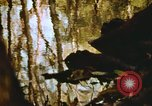 Image of The Great Dismal Swamp United States USA, 1974, second 27 stock footage video 65675021550