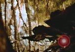 Image of The Great Dismal Swamp United States USA, 1974, second 28 stock footage video 65675021550