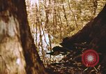 Image of The Great Dismal Swamp United States USA, 1974, second 36 stock footage video 65675021550