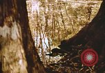 Image of The Great Dismal Swamp United States USA, 1974, second 37 stock footage video 65675021550