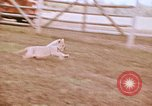 Image of Miller Johnson circus in the United States United States USA, 1974, second 47 stock footage video 65675021552