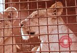 Image of Miller Johnson circus in the United States United States USA, 1974, second 53 stock footage video 65675021552