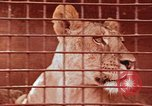 Image of Miller Johnson circus in the United States United States USA, 1974, second 54 stock footage video 65675021552