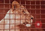Image of Miller Johnson circus in the United States United States USA, 1974, second 56 stock footage video 65675021552