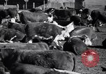 Image of government food distributed to tenant farmers Iowa United States USA, 1939, second 15 stock footage video 65675021578