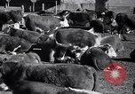 Image of government food distributed to tenant farmers Iowa United States USA, 1939, second 16 stock footage video 65675021578