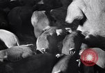 Image of government food distributed to tenant farmers Iowa United States USA, 1939, second 17 stock footage video 65675021578