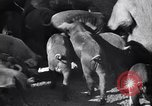 Image of government food distributed to tenant farmers Iowa United States USA, 1939, second 19 stock footage video 65675021578