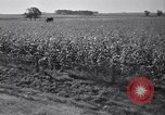 Image of government food distributed to tenant farmers Iowa United States USA, 1939, second 45 stock footage video 65675021578