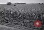Image of government food distributed to tenant farmers Iowa United States USA, 1939, second 46 stock footage video 65675021578