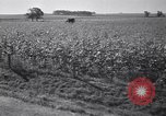 Image of government food distributed to tenant farmers Iowa United States USA, 1939, second 48 stock footage video 65675021578