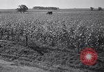Image of government food distributed to tenant farmers Iowa United States USA, 1939, second 49 stock footage video 65675021578