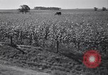 Image of government food distributed to tenant farmers Iowa United States USA, 1939, second 50 stock footage video 65675021578
