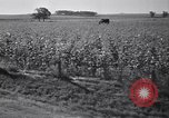 Image of government food distributed to tenant farmers Iowa United States USA, 1939, second 51 stock footage video 65675021578