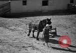 Image of government food distributed to tenant farmers Iowa United States USA, 1939, second 55 stock footage video 65675021578