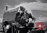 Image of American livestock United States USA, 1939, second 3 stock footage video 65675021580