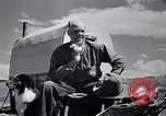 Image of American livestock United States USA, 1939, second 5 stock footage video 65675021580