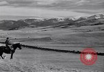 Image of American livestock United States USA, 1939, second 29 stock footage video 65675021580