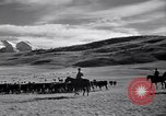 Image of American livestock United States USA, 1939, second 34 stock footage video 65675021580