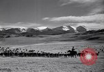 Image of American livestock United States USA, 1939, second 42 stock footage video 65675021580