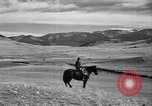 Image of American livestock United States USA, 1939, second 48 stock footage video 65675021580