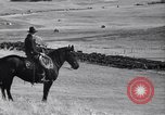 Image of American livestock United States USA, 1939, second 49 stock footage video 65675021580