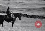 Image of American livestock United States USA, 1939, second 50 stock footage video 65675021580