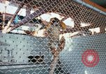 Image of LSD experiments animal testing San Francisco California USA, 1968, second 2 stock footage video 65675021680