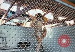 Image of LSD experiments animal testing San Francisco California USA, 1968, second 3 stock footage video 65675021680