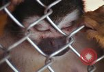 Image of LSD experiments animal testing San Francisco California USA, 1968, second 12 stock footage video 65675021680