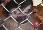 Image of LSD experiments animal testing San Francisco California USA, 1968, second 14 stock footage video 65675021680
