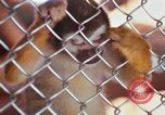 Image of LSD experiments animal testing San Francisco California USA, 1968, second 16 stock footage video 65675021680