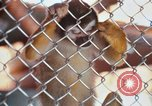Image of LSD experiments animal testing San Francisco California USA, 1968, second 17 stock footage video 65675021680