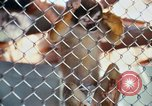 Image of LSD experiments animal testing San Francisco California USA, 1968, second 19 stock footage video 65675021680