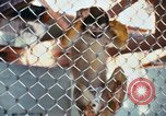 Image of LSD experiments animal testing San Francisco California USA, 1968, second 20 stock footage video 65675021680