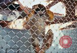 Image of LSD experiments animal testing San Francisco California USA, 1968, second 21 stock footage video 65675021680