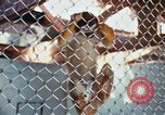 Image of LSD experiments animal testing San Francisco California USA, 1968, second 22 stock footage video 65675021680
