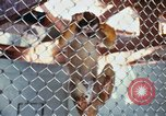 Image of LSD experiments animal testing San Francisco California USA, 1968, second 24 stock footage video 65675021680