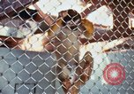 Image of LSD experiments animal testing San Francisco California USA, 1968, second 26 stock footage video 65675021680