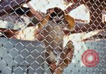 Image of LSD experiments animal testing San Francisco California USA, 1968, second 28 stock footage video 65675021680
