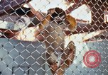 Image of LSD experiments animal testing San Francisco California USA, 1968, second 29 stock footage video 65675021680