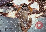 Image of LSD experiments animal testing San Francisco California USA, 1968, second 31 stock footage video 65675021680