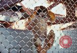 Image of LSD experiments animal testing San Francisco California USA, 1968, second 33 stock footage video 65675021680