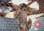 Image of LSD experiments animal testing San Francisco California USA, 1968, second 34 stock footage video 65675021680