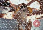 Image of LSD experiments animal testing San Francisco California USA, 1968, second 35 stock footage video 65675021680