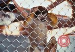 Image of LSD experiments animal testing San Francisco California USA, 1968, second 36 stock footage video 65675021680