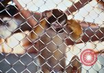 Image of LSD experiments animal testing San Francisco California USA, 1968, second 37 stock footage video 65675021680