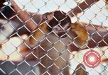 Image of LSD experiments animal testing San Francisco California USA, 1968, second 38 stock footage video 65675021680